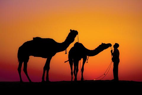 Camels in the Thar Desert, Rajasthan India. Source: Intrepid Travel