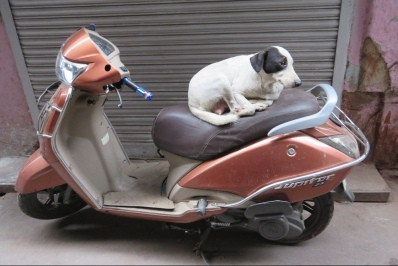 Dog sitting on a moped