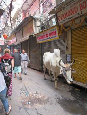 A bullock walks through the streets of Delhi