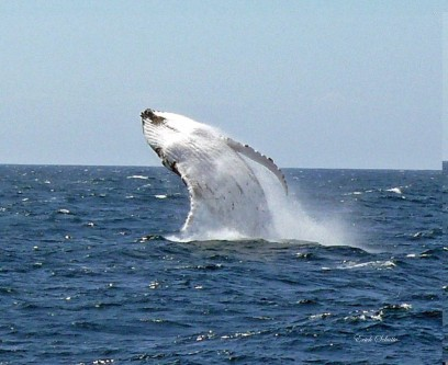 Whale watching. Photo: Merimbula Tourism
