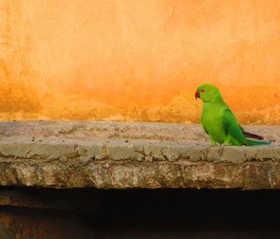 A bright green parrot sits on a ledge