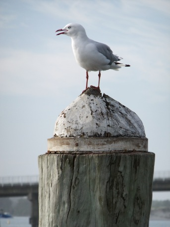 Seagull sits on top of post