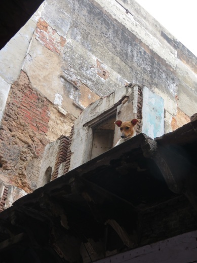 Dog on a roof
