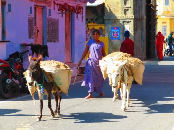 Hard working donkeys, Udaipur