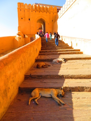 Steps up to Amber Fort with sleeping dogs