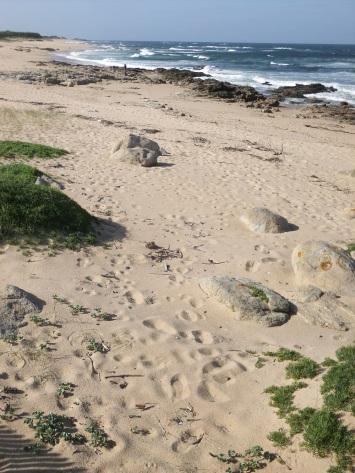 Ocean views of the Camino Portuguese