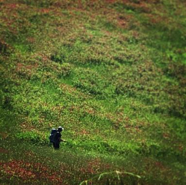 A solo walker in a green field. Italy