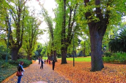 Fitzroy Gardens, Autumn leaves