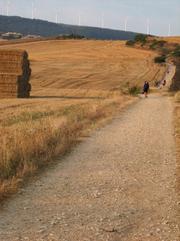 people hiking through wheat fields on the camino frances