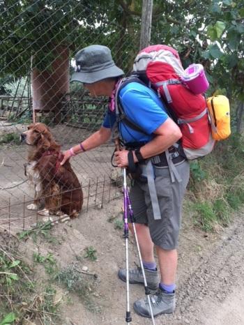 Patting a dog through a fence