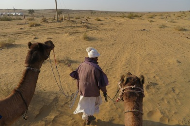 A cameleer leads two camels in the Thar desert