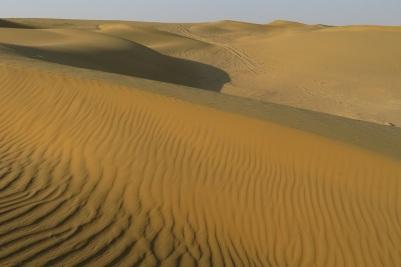 Sand dunes in the Thar Desert