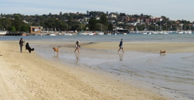 Dogs and humans playing on Rose Bay Beach