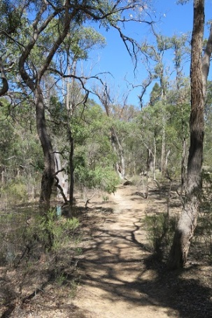 A dusty path through the Australian bush - near Mudgee