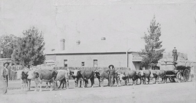 Bullock wagon on Fitzroy St Walcha in 1908