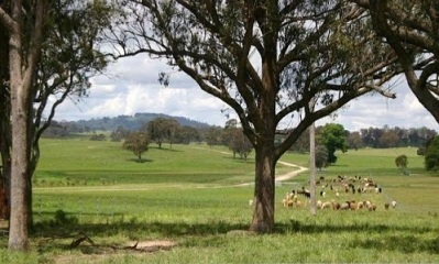 Rolling green hills and fat livestock in the Walcha region
