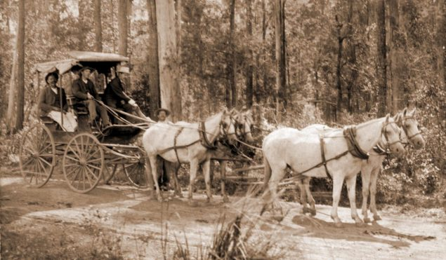 Early public transport in the Wauchope are - Robinson's Coach.