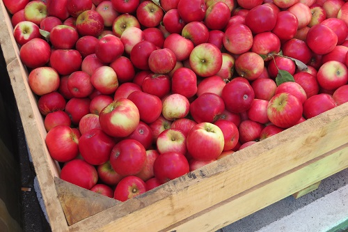 Apples at the Salamanca Market Hobart