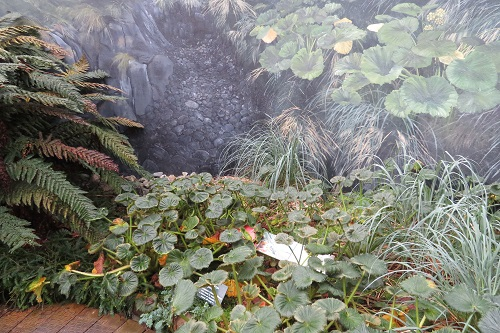 Plants in the Subantarctic Plant House