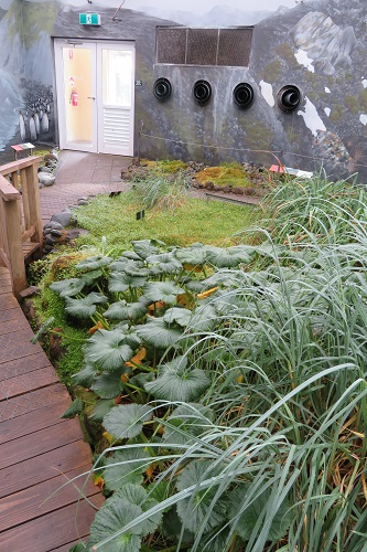 Strolling through the Subantarctic Plant House
