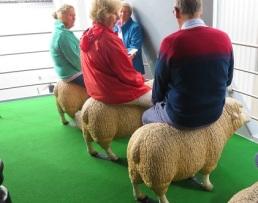 Sheep on the Mona Roma Ferry MONA, Hobart Tasmania
