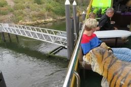 Tigers on the Mona Roma Ferry MONA, Hobart Tasmania