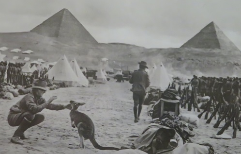 A kangaroo as a military mascot in Egypt in World War 1