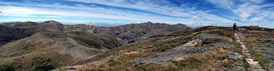 Hikers walk across Mountain tops on the Australian Alps Walking trail