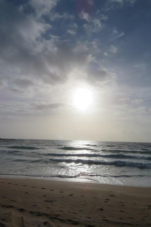Palm Beach as Summer Bay