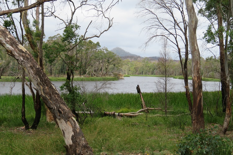 Dunns Swamp - Wollemi National Park