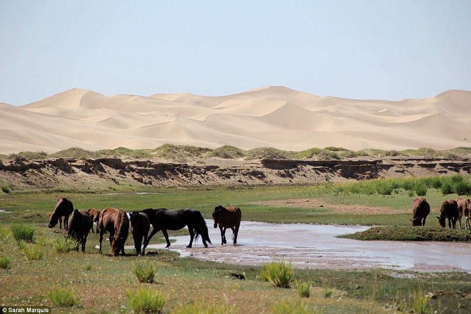 Sarah Marquis - Gobi Desert