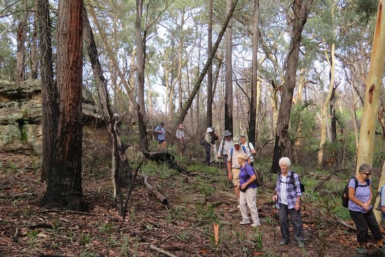 Mudgee Bushwalking Club at Fern Tree Gully Reserve