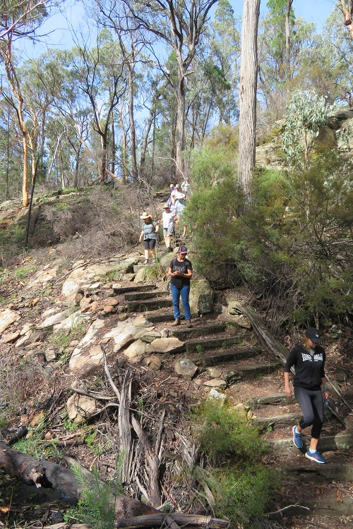 Walking through Fern Tree Gully Reserve