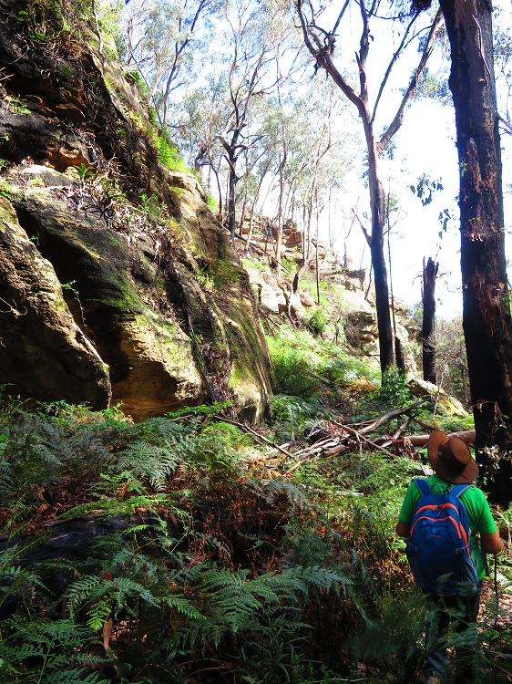 Walking down into Fern Tree Gully Reserve