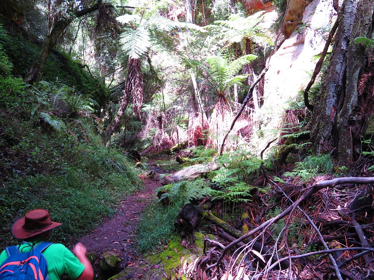Cool paths in Fern Tree Gully Reserve