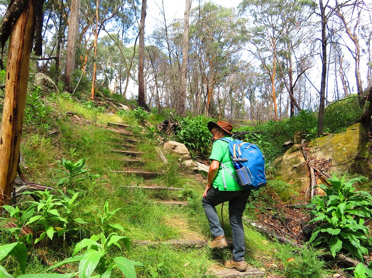 Climbing back out of Fern Tree Gully Reserve