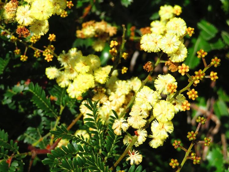Australian Native Flora