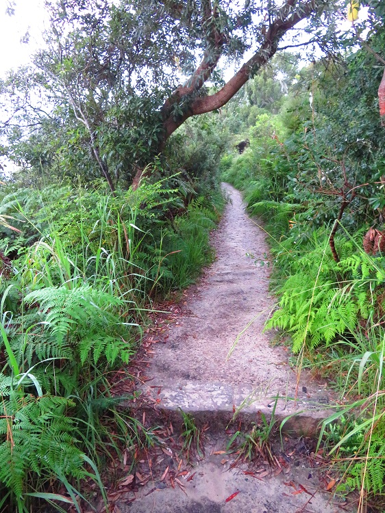 A bush path on Stage 6 of the Bondi to Manly Path