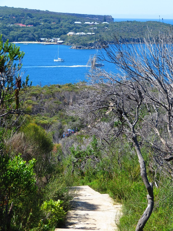 Views to North Head and Quarantine Station from the Bondi to Manly Path