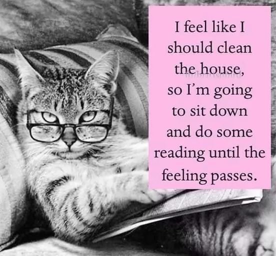 A cat with glasses is sitting reading a book
