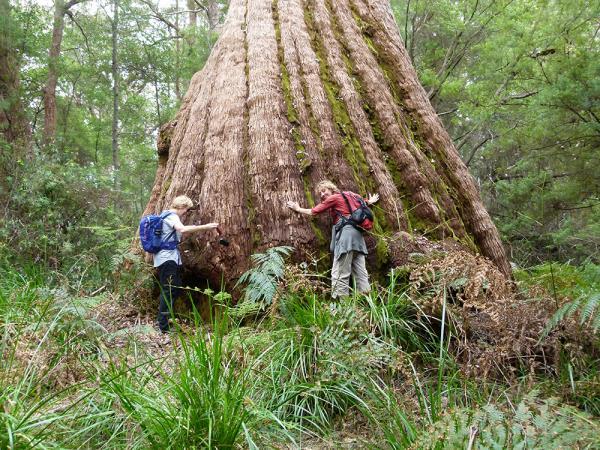 Tree huggers on the trail. Source: responsibletravel.com