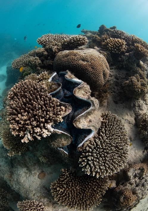 snorkeling on Ningaloo Reef